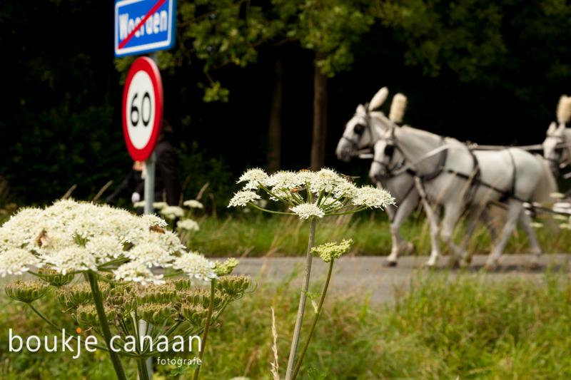 Boukje Canaan - Ilona-6512